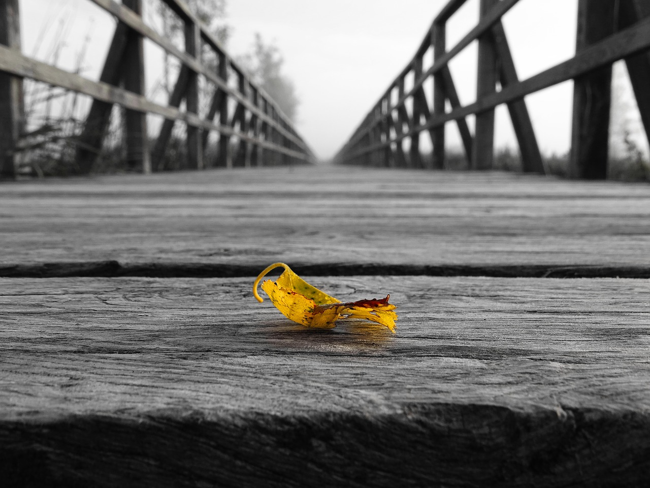モノクロの橋に落ちた色付きの葉(価値あるものへの気付き)